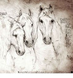 Buy beautiful Andalusian Horse artwork and unique horse drawings. Buy unique Da Vinci style drawings with interesting handwritten notes about your favorite equines in Leonardo Da Vinci style Horse Drawings, Animal Drawings, Art Drawings, Equine Art, Horse Art, Painting & Drawing, Renaissance, Illustration Art, Sketches