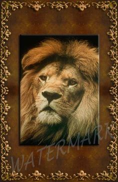 Nature Greeting Card - Lion African - Digital Printable Download - (blank so you can use it for any occasion) by TreasuresOfJen on Etsy