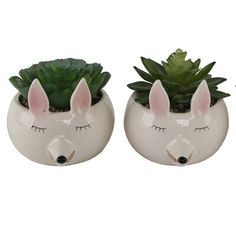 Ebern Designs 2 Piece Small Fox Succulent Desktop Plant in Pot