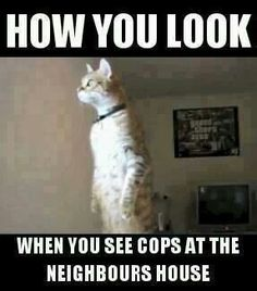 How you look - when you see cops at the neighbor's house [photo of cat]