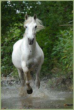 White horse - 'Make way - I´m coming'.................. - by Linda Peinemann