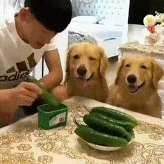 You need to share food