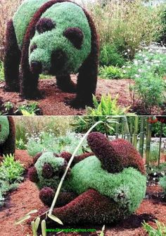 pandas  topiary. I WILL have these in my yard someday