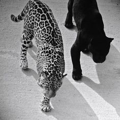 Black and white...