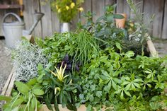 Wondering which herbs are toxic or dangerous? Here's a list of a few common herbs that can be harmful to pregnant women or pets.
