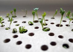 Sprout Table (Lena Louisa Meyer, 2012): a pine table that is adorned with a corian tablet covered in holes that mimic traditional lace tablecloth pattern. The tablet is also opens up, allowing users to plant their favorite spice.