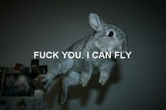 fuck you. i can fly