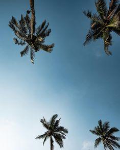 Wir vermissen den Strand und die Palmen... 🏝 Wir können es immernoch nicht glauben, dass wir unsere Reise frühzeitig beenden mussten. Aber für uns ist es nicht ein Abbruch sondern eher ein Unterbruch. Unser Ziel ist es definitiv, die Reise noch so abschliessen zu können, so wie wir es geplant hatten 💪🏼 . Aktuell nutzen wir die Zeit um unsere Fotos zu sortieren und zu bearbeiten 🤔 Falls ihr sehen wollt wie wir unsere Fotos bearbeiten, können wir gerne mal ein Vorher- / Nachher Bild… Thailand Travel, Strand, Travel Inspiration, Clouds, Outdoor, Instagram, Edit Photos, Sorting, Goal