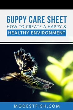 In this article, you'll discover the exact steps you need to take in order to provide your beautiful guppy with a happy and healthy environment. Freshwater Aquarium Plants, Planted Aquarium, Freshwater Fish, Guppy, Tropical Fish Pictures, Pretty Fish, Fish Care, Fish Drawings, Fish Farming