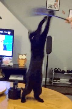 Involuntary Belly Dance