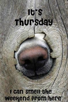 It's Thursday. I can smell the weekend from here #thursday nose its thursday funny thursday weekend is coming thursday quotes