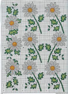 Margherite fiori foglie