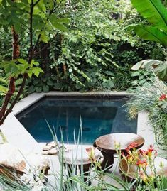 Love the small pool .Pool landscaping ideas want this for my secret romantic nights with my husband Swimming Pool Landscaping, Small Swimming Pools, Small Pools, Outdoor Swimming Pool, Swimming Pool Designs, Backyard Landscaping, Landscaping Ideas, Backyard Pergola, Outdoor Rooms