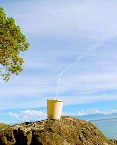 Compostable Hot cups made from sustainable resources Compost, Glass Of Milk, Plant Based, Coffee Cups, Hot, Plants, How To Make, Coffee Mugs, Composters
