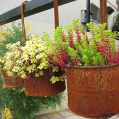 #Rusty Cans #Repurposed into into flower holders