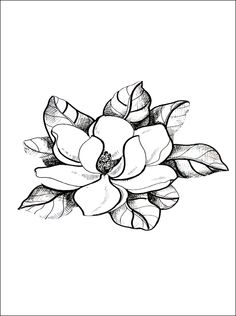 Magnolia coloring page | Coloring pages