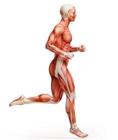 What you Need to Know From Essentials of Exercise Science. Exam Prep Blog