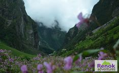 Valley of Flowers Trek is a trek inside National Park is an Indian national park, located at a height in West Himalaya. Valley Of Flowers, Trek, National Parks, Tours, Adventure, Mountains, Nature, Naturaleza, Adventure Game