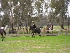 The highlight of the Black and Tans hunt calender commenced from the Saint Germains homestead and continued on to the neighboring property Riverview Park, Un. Riverview Park, Fox Hunting, Horses, Memories, Dogs, Animals, Memoirs, Souvenirs, Animales