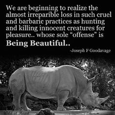 Animal Quotes, Animal Rights & Religions