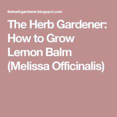 The Herb Gardener: How to Grow Lemon Balm (Melissa Officinalis)