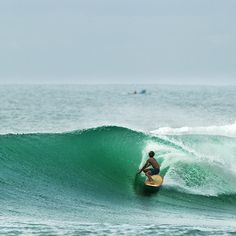 Harrison Roach, Java. Photo by Anthony Dodds.