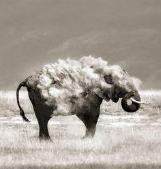Amazing. Elephants are so awesome. Photo by Marina Cano