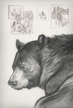 Animal Sketches, Animal Drawings, Cool Drawings, Drawing Sketches, Pencil Drawings, Art And Illustration, Bear Sketch, Bear Drawing, Bear Cartoon