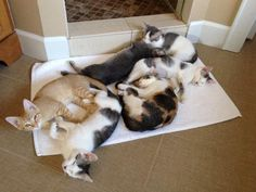 kitties discover heated floor. :)