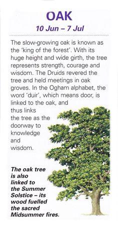 Celtic Tree Astrology – Oak