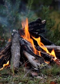 The smell of a campfire in a forest of pine trees