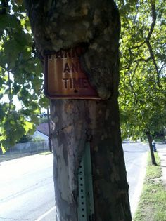 This local tree ate a street sign - Imgur