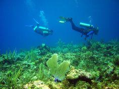 Buceo en el mar de los siete colores de San Andrés, Colombia :) diving/ mergulho  :)