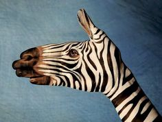 """""""God has a sense of humor. Don't believe me? Just look at a zebra and tell me what was going on in His mind that day.""""  Kim Gruenenfelder"""