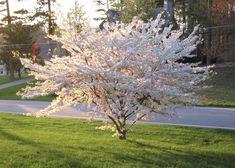 Dandelion, Flowers, Plants, Paisajes, Dandelions, Flora, Planters, Royal Icing Flowers, Flower