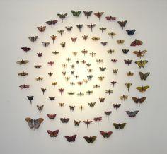 nice spiral of buterflies