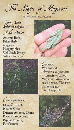 The Magic of Mugwort at Hagstone Publishing Plant Magic, Magic Herbs, Herbal Magic, Wiccan Spell Book, Wiccan Spells, Magick, Hoodoo Spells, Green Witchcraft, Witchcraft Herbs