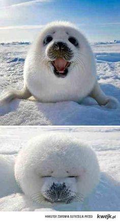 cute xD seal