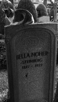 Cat on a grave at cemetery on Zurich, Switzerland Gucci Soho Disco, Zurich, Cemetery, Switzerland, Cats, Gatos, Cat, Kitty, Kitty Cats