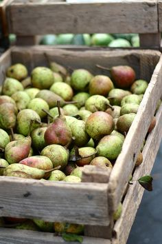 "♫ down the orchard farm X ღɱɧღ || ffoodd: "" First pears of the season (by ceciliasun) """