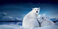 Dyr i naturen lever ude hele året