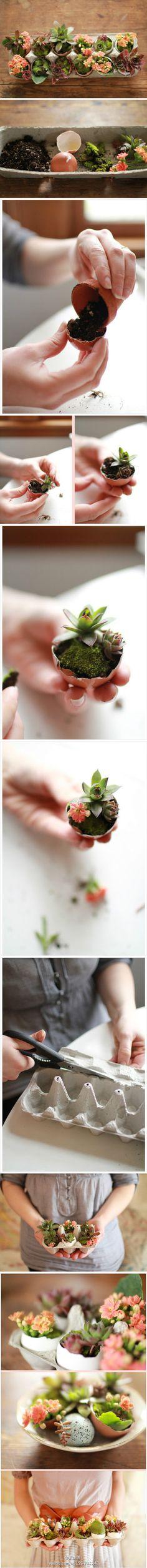 制作属于你的蛋壳花园。所需材料:盆栽土,鸡蛋壳,苔藓,多肉,花。步骤:①在空蛋壳里填入适量盆栽土②加入肉植③在土壤上方添加一层青苔④如果你喜欢,可以加枝可爱的花朵注入色彩⑤切断一个鸡蛋箱的两侧,并加入… - 堆糖 发现生活_收集美好_分享图片