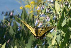 Butterfly by ~kenzeec on deviantART