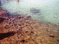 Piscinas naturais em Porto de Galinhas - Viagem com Sabor