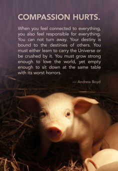 Compassion does hurt! But I would never trade it to be ignorant and uncaring to animals and their rights