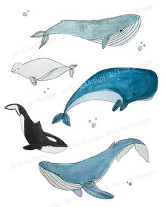 Illustration whale print - Jo-Lou Design How To Use Ma Whale Drawing, Whale Painting, Watercolor Whale, Watercolor Animals, Whale Nursery, Nursery Art, Nautical Nursery, Whale Art, Kids Wall Decor