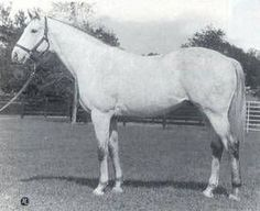 Silver Saber(1972)Drone- Happy Flirt By Johns Joy. 3x5 To Bull Dog. 37 Starts 9 Wins $281,025 In Fr & U.S. Won Escondido H.: