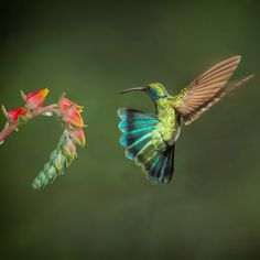 Landing! by HaliSowle - Colorful Birds Photo Contest