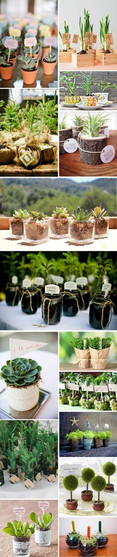 11 Ultimate Great Ideas for Lovely Plant Wedding Favors