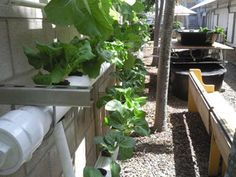 I want to tell you about a really cool course I've been taking on Udemy these past couple of weeks. It's all about aquaponics and how I can create my own little ecosystem in the backyard, where fish and plants will feed off of one another, resulting in two types of organic, natural, clean food …
